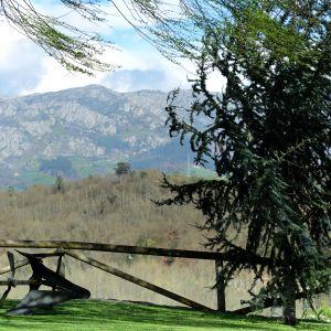 Foto El Pongallín