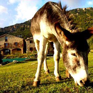 Foto Masies Puigventós